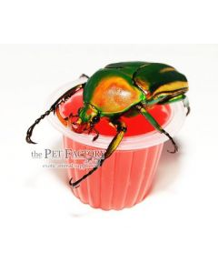 Beetle Jelly HP mansikka